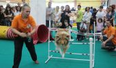 Evenimente care iti taie respiratia in Arena PetExpo