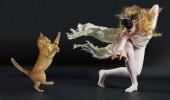 pisici dansatoare
