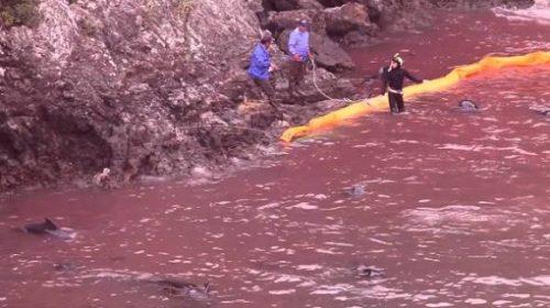 Masacrarea delfinilor, in sezonul 2015-2016