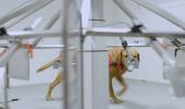 Avem dovada VIDEO: Câinii pot depista cancerul înaintea medicilor! Imagini din LABORATORUL de TESTARE
