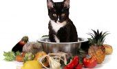 Hrana pisicilor: uscată sau umedă, care e mai bună?