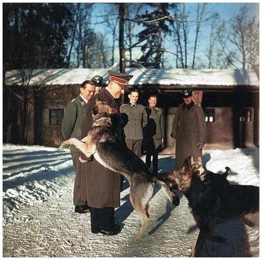 """""""Wolfsschanze"""", Adolf Hitler mit Blondi, Winter 1942/43"""