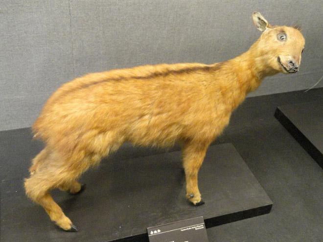 taxidermia  (17)