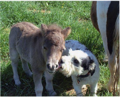 TOP 3 prietenii surprinzătoare între animale!