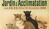 Postere pisici (11)