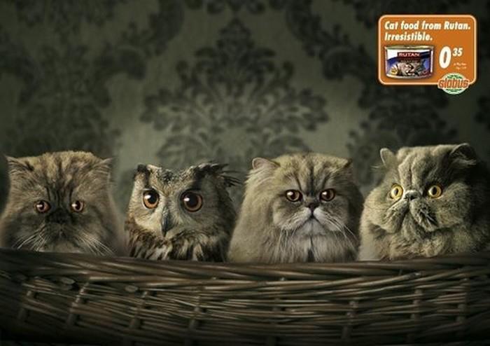 Postere pisici (20)