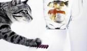 Postere pisici (23)