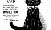 Postere pisici (3)