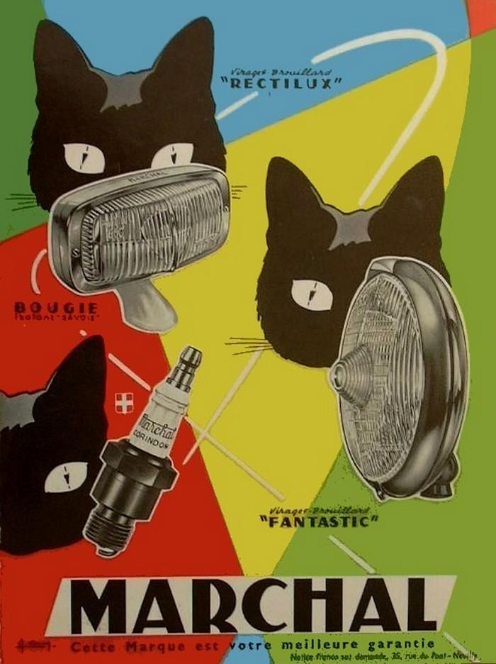 Postere pisici (41)