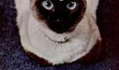 Postere pisici (46)