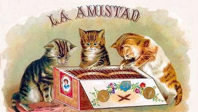 Postere pisici (51)