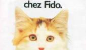 Postere pisici (53)