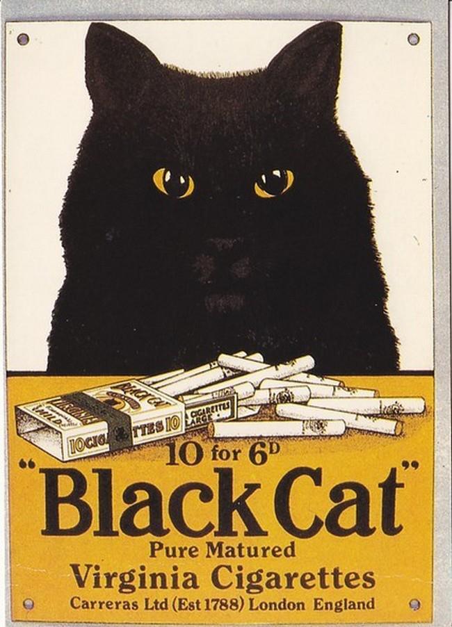 Postere pisici (56)