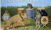 Postere pisici (57)
