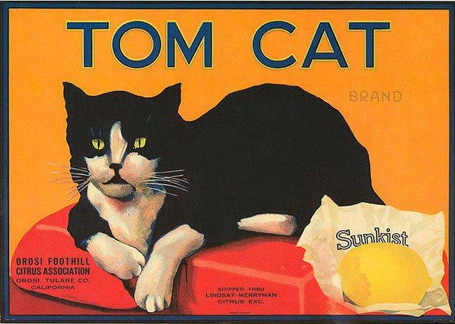 Postere pisici (65)