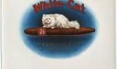 Postere pisici (71)