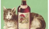 Postere pisici (77)