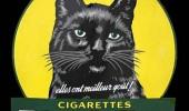 Postere pisici (87)