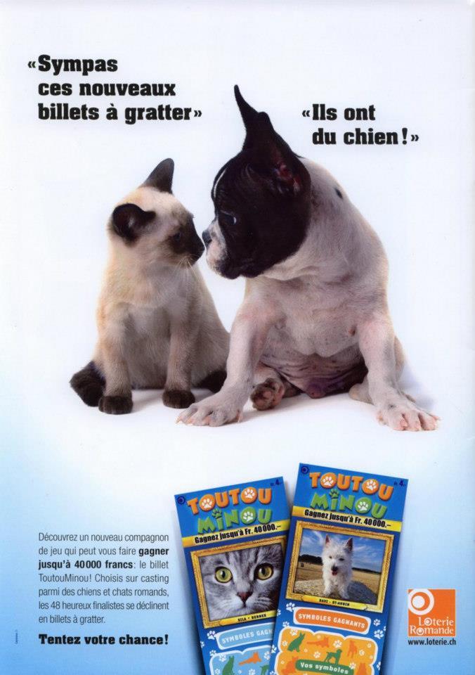 Postere pisici (94)