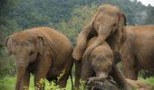 elefant in natura