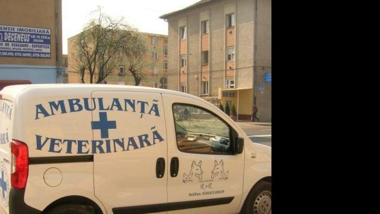 en el pene - Traducere în română - exemple în spaniolă | Reverso Context