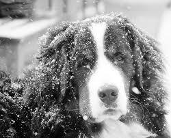 Nu doar oamenii au probleme iarna