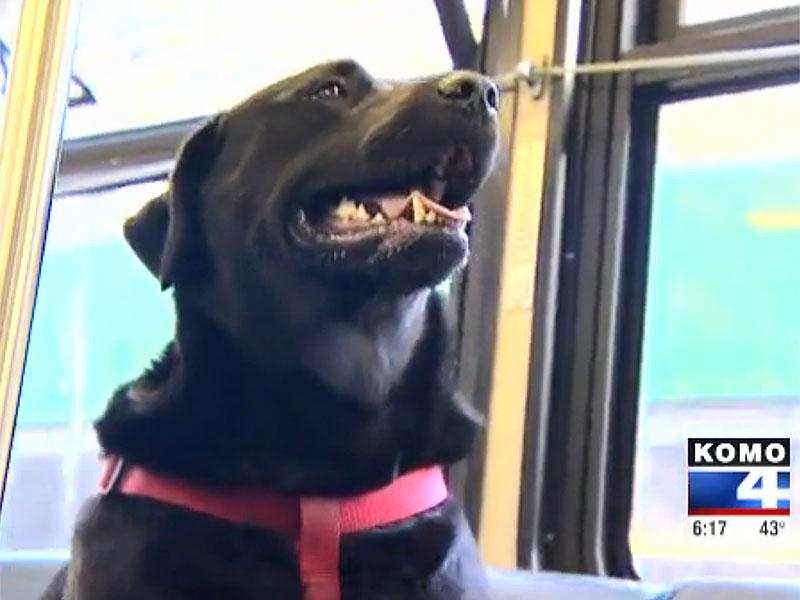 bus-dog-800