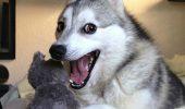 Gesturi pe care le folosesc cainii pentru a comunica. Suntem siguri că nu știai asta. Uite ce înseamnă când te atinge cu lăbuța
