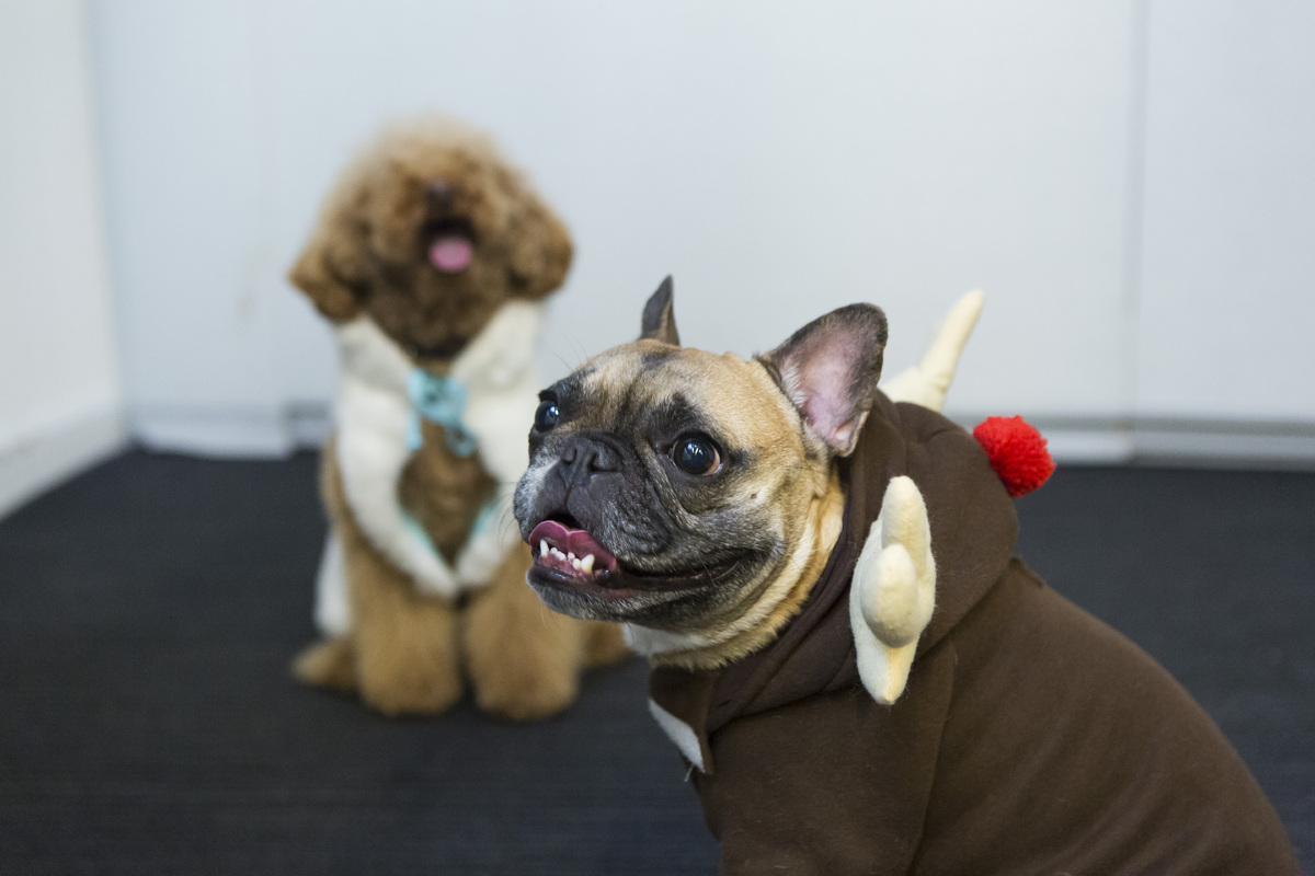 dogs style 2