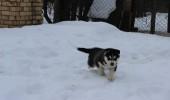 happy in snow