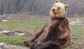 Sanctuarul de urși de la Zărnești – Libearty