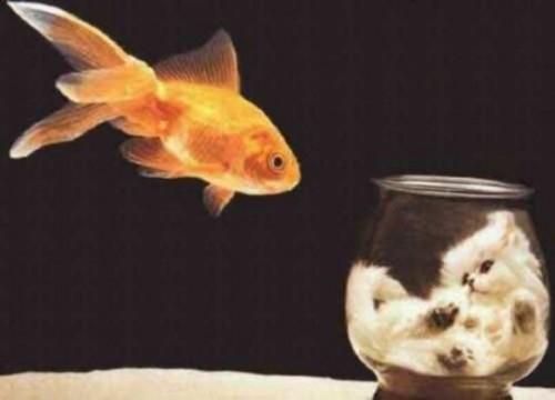 Pisicile si acvariile