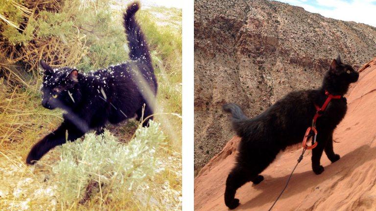 pisica-alpinista-Millie