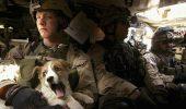 Soldați, sergenți, generali și câinii lor