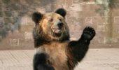 Sanctuarul din Zărnești va primi doi urși bețivi