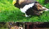 Cele mai frumoase grădini zoologice din Europa