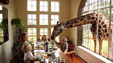 a96811_a506_giraffes_23173400