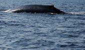 O balena ratacita in portul Buenos Aires
