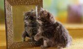 Ce văd animalele când se uită în oglindă