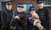 Câinii care-i protejează pe londonezi