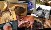 TOP-ul cele mai importante animale dispărute din România