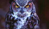 Mit sau realitate? De ce s-a ajuns la teama faţă de păsările de noapte?