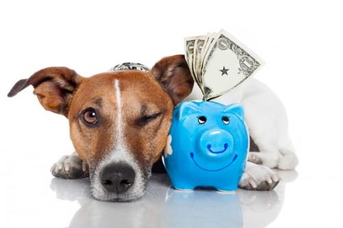 Cum reduci cheltuielile cu animalutul tau de companie
