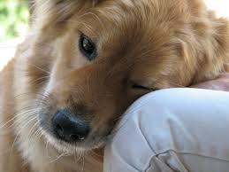 De ce RESPING câinii PERSOANELE care sunt ostile cu stăpânii lor? Ce șanse mai au?