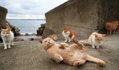 Insula pe care traiesc mai multe pisici decat oameni! FOTO