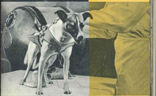 Laika, primul caine trimis in spatiu a murit in chinuri ingrozitoare