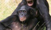 Criteriile dupa care se imperecheaza unele animale – O sa mori de ras!