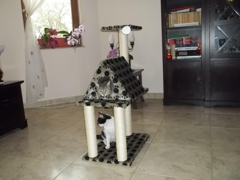 Pisi - Concurs Animalzoo