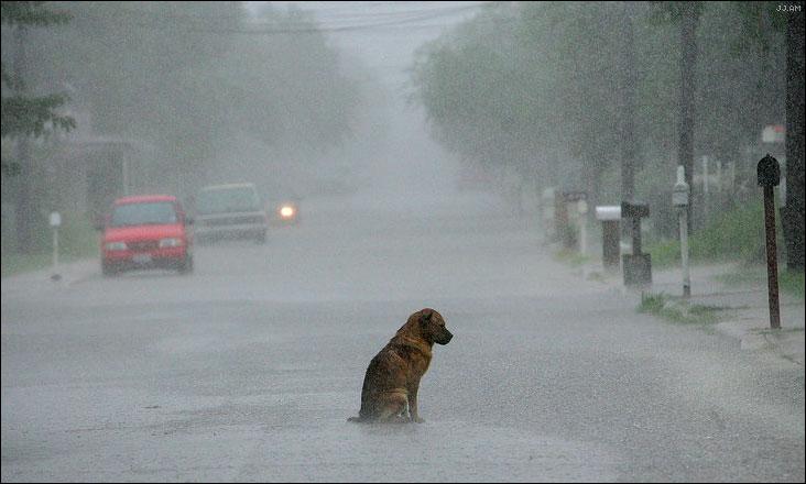 sinucida caine ploaie