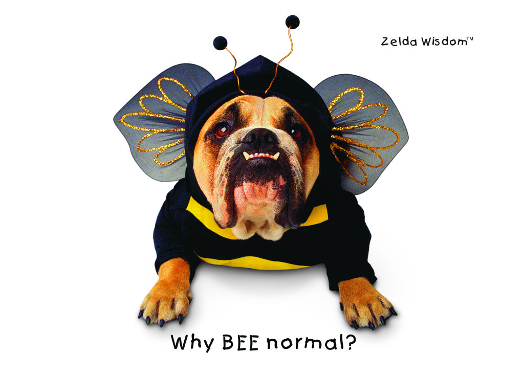 Why Bee Normal?(Blank inside)